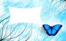 papilon bleu