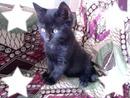 Haïka mon petit chat