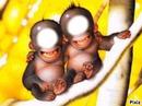 2 singe