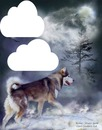 husky dans la neige 2 photos