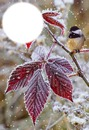 Oiseau sur branche avec neige