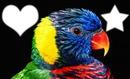 Pájaro # 1
