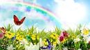 Arco iris florido