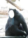 Singe Zoo d'Anvers
