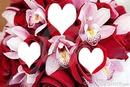 orchidées et roses