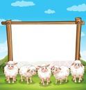 1 photo 5 moutons