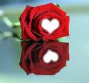 Ma rose à moi