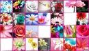 <patchwork de fleurs