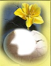 Oeuf & fleur Nature