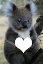 Soen mon coeur Koala et moi