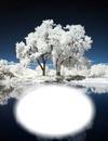 Arbre blanc-hiver