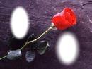 deux images avec rose