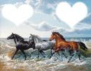les chevaux da la mer
