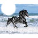 course dans l ocean