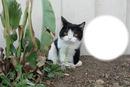 Братът на Grumpy cat