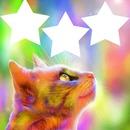 chat avec 3 photos étoiles