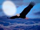 air beneath my wings