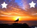 coucher de soleil avec pigeon