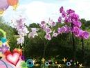 Fleur.Coeur