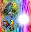 color abstrait