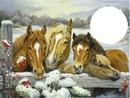 noel  des chevaux