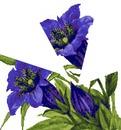 fleurs violette