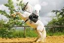 cabre avec ton cheval