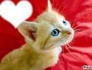 Petit chat au yeux bleu