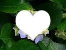 le coeur de maa fleure