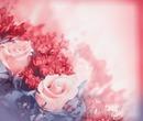 Rosa-Rosen-Love