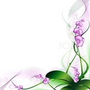 frame orhid