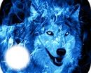 """""""blauwe wolf"""""""