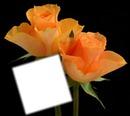 Roses orangée
