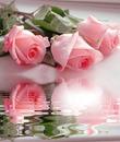 Reflejo floral