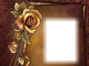 Cadre-fleur-rose-fond brun