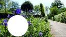Flores Azuis!!