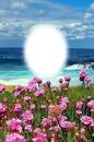 Cc Flores mar