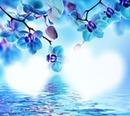 Orchidee blue 2 Herzen