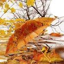 ősz van