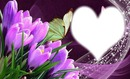 cadre violet crocus