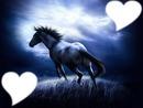 chevaux nuit
