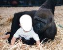 El niño y el gorila