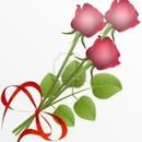 3 roses dans mon jardin de l'AMITIÉ