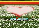 Campo fiorito con cuore