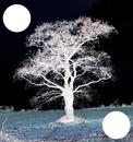 L'arbre qui inspire . 2 photos