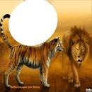 tigre et lion