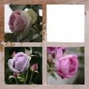Les Roses II