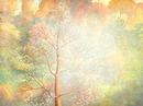 arbre 65