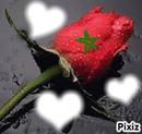 maroc fleur