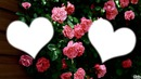 *parfum de fleurs*13*